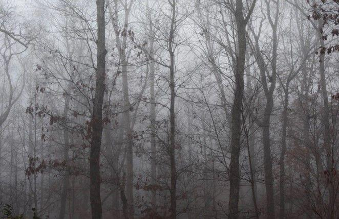 The Hoia Baciu Forest - Haunted Forest, Circle, Facts, Documentary