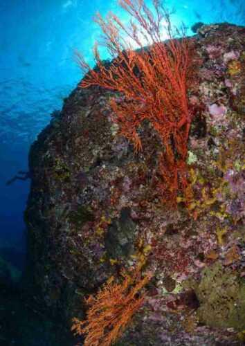Yonaguni Monument sea