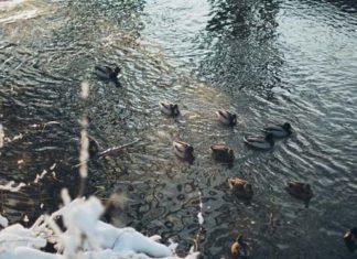 anjikani lake