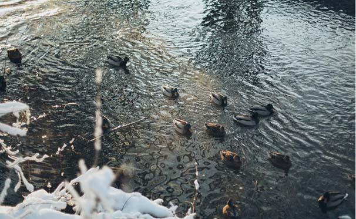 The Mystery of the Anjikuni Lake Canada: History, Images