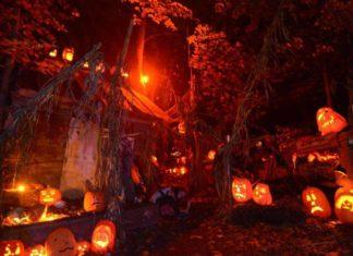 markoff's haunted forest photo