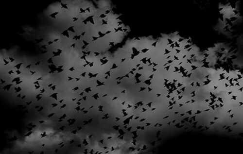 Jatinga Bird Suicide- Assam