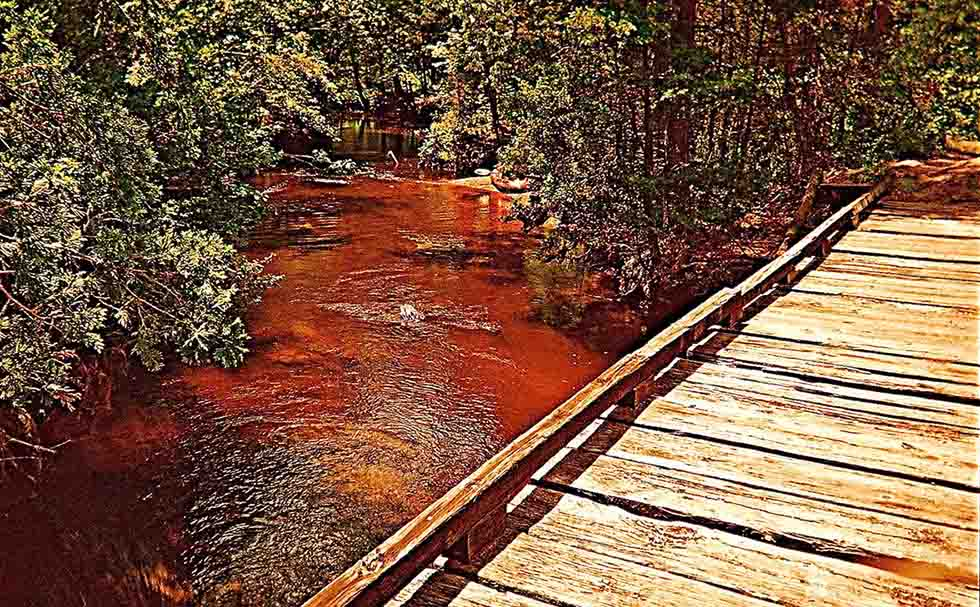 Pine Barrens images