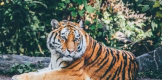 Wildlife Places in India pic