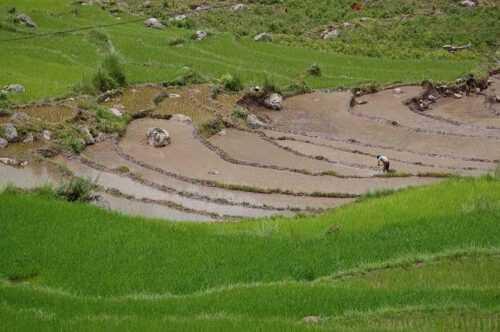 Trekking-in-Bhutan-photos