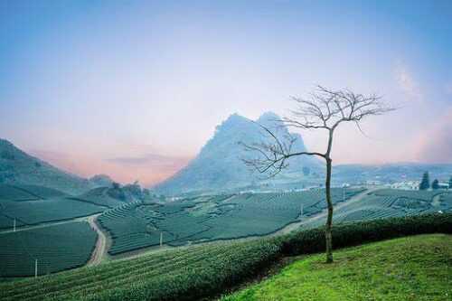 Happy-Valley-Tea-Estate-pics