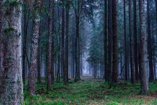 Suicide-Forest-pics