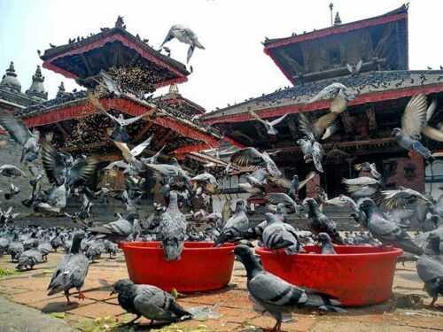 Swayambhunath-images