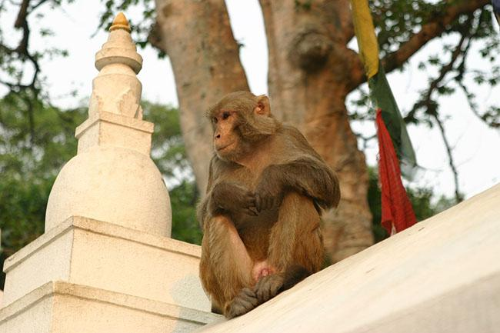 Swayambhunath-monkey-temple
