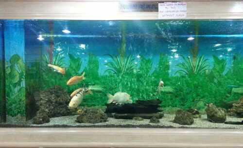 Jawahar-Aquarium-massoorie