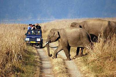 Rajaji National Park places to visit in dehradun