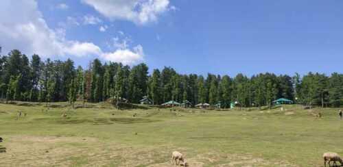 Sanasar Hill Station near Katra