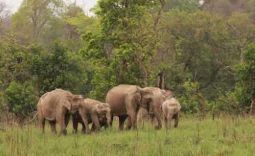 Rajaji National Park  Dehradun Travel Guide