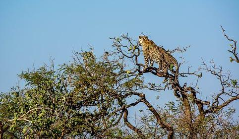 Gir National Forest Most Attractive Places in India