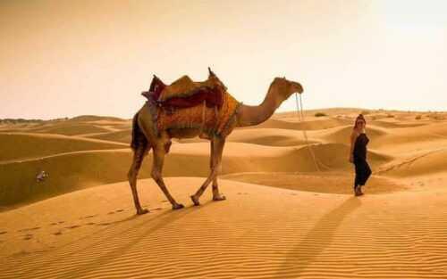 Desert camel safari Jaisalmer