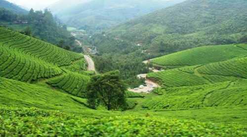 Kolukumalai Tea Estate, Tamil Nadu
