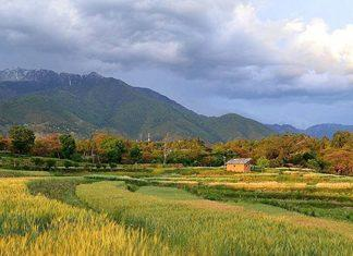 Palampur Best Places to Visit