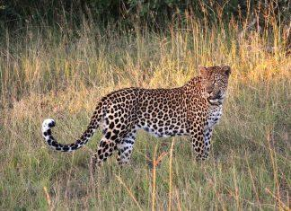 leopards sanctuaries
