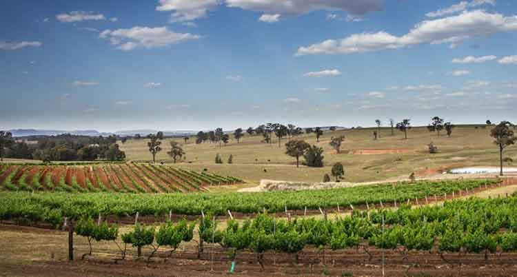 Hunter Valley – Finest Wines for Beautiful Evenings