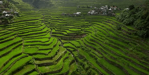 The Bright Batad Rice Terraces