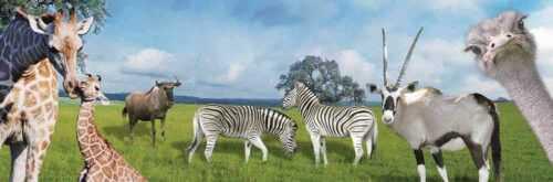Natural Wildlife
