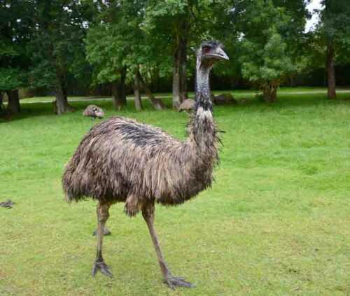 emo in jaipur Zoo