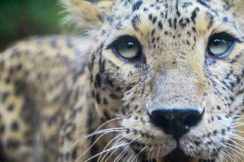 jaipur zoo Photos